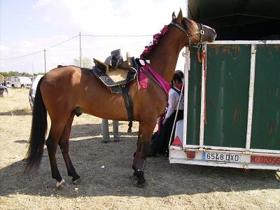 dia del caballo en villaviciosa Copia_49