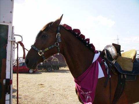 dia del caballo en villaviciosa Copia_50