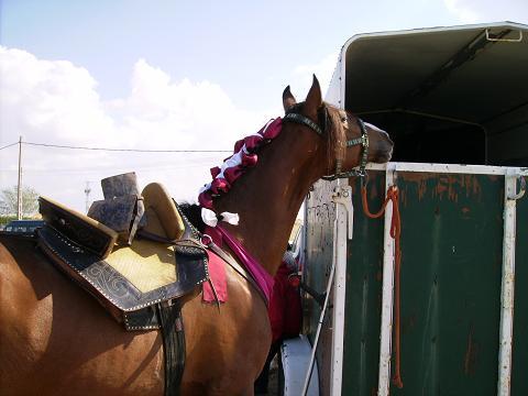 dia del caballo en villaviciosa Copia_51