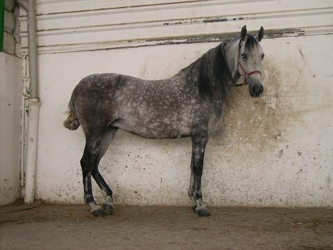 dia del caballo en villaviciosa Pict2510