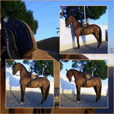 dia del caballo en villaviciosa Yet12