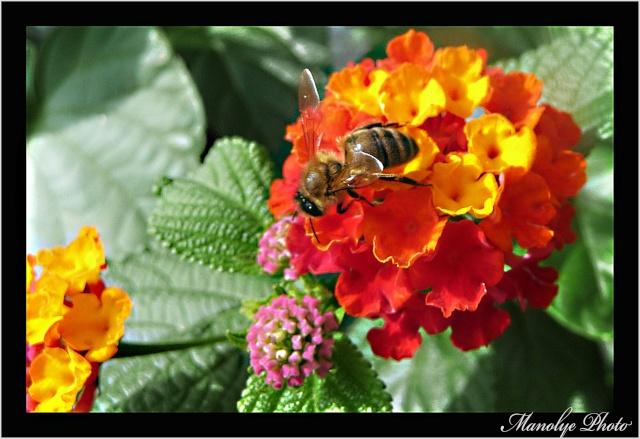 Vos plus belles rencontres avec la nature - Page 4 P1090814