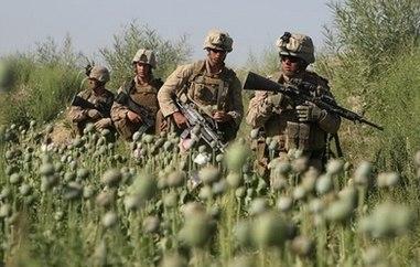 Les Britanniques et l'opium afghan Poppy410