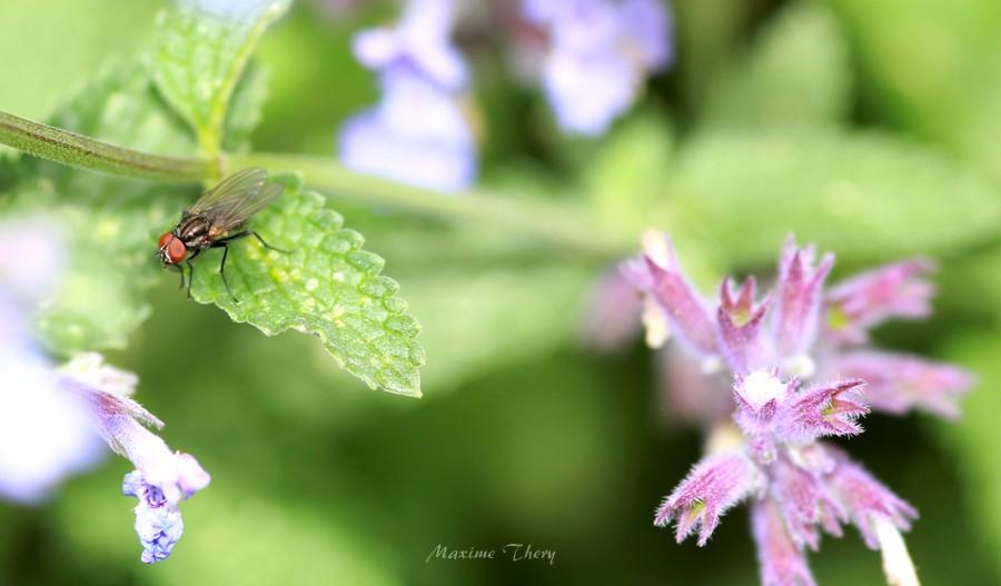 Une mouche. Img_2410