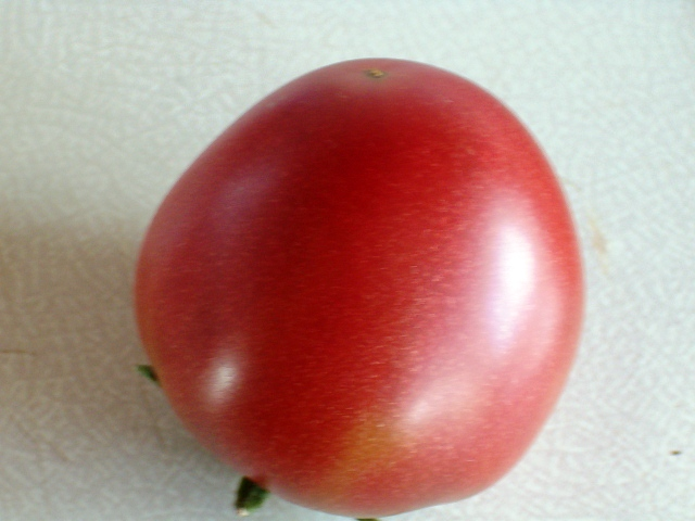 Ma première tomate. Noir_d10