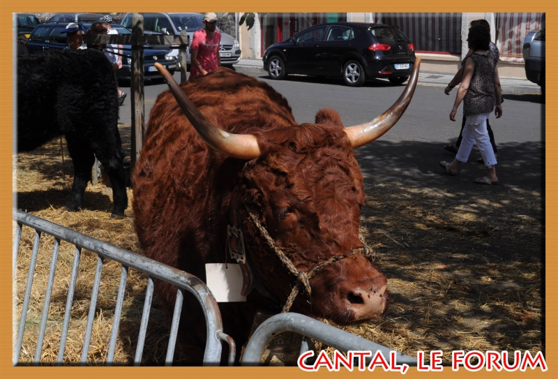Le Cantal en 2012 Dsc_4513