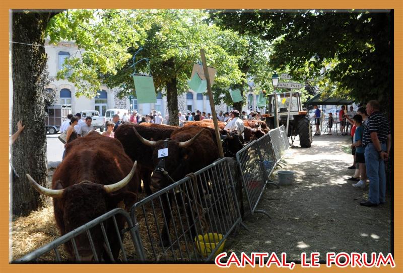 Le Cantal en 2012 Dsc_4514