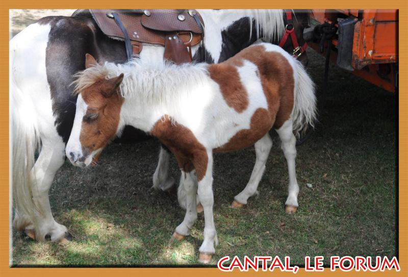 Le Cantal en 2012 Dsc_4518