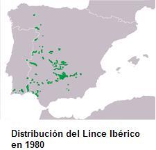 El Lince Ibérico, Nuestro gran tesoro Lince210
