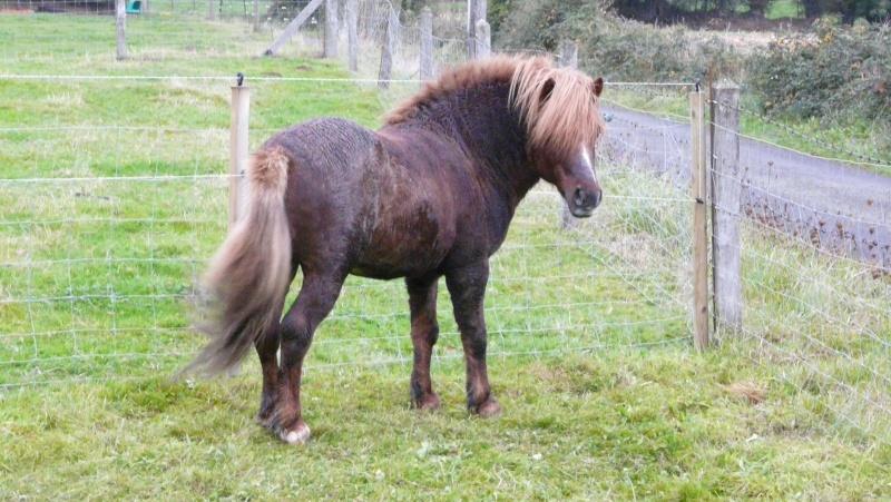 PETIT COEUR - ONC Poney typé Welsh Mountain né en 2004 - adopté en novembre 2008 par tassin50 - Page 2 P1010010