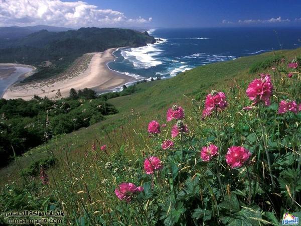صور لشوااااطئ رائعة تستحق المشاهدة 513
