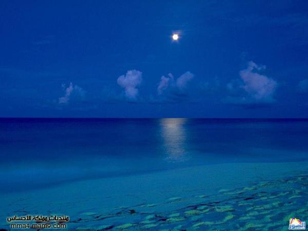 صور لشوااااطئ رائعة تستحق المشاهدة 811