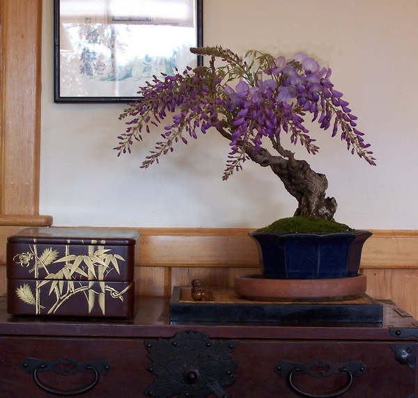 For Todd Ellis (and ofcourse all other IBC friends) my Wisteria Wister10