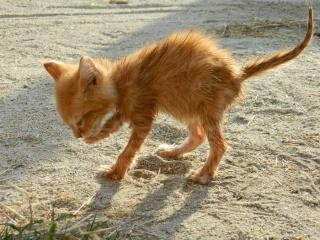 amis des bêtes, cliquez pour les animaux ! clicanimaux…  - Page 4 Soaked10