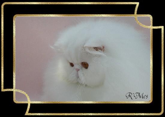 les chats de la Chatterie R' Mes 2_bogo11