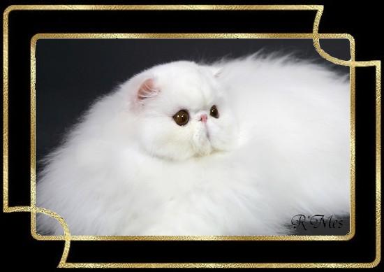 les chats de la Chatterie R' Mes 2_coca10