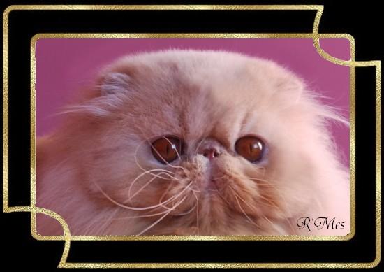 les chats de la Chatterie R' Mes 2_drag11