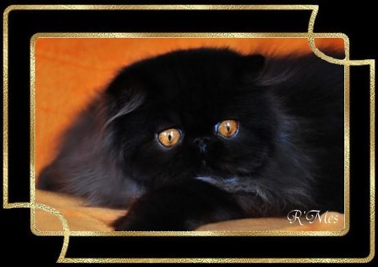 les chats de la Chatterie R' Mes 2_fabu10