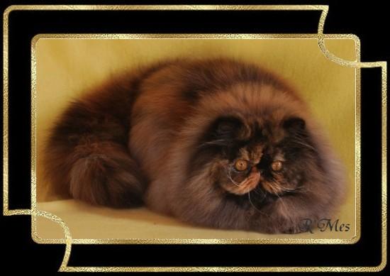 les chats de la Chatterie R' Mes 2_laud10