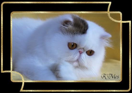 les chats de la Chatterie R' Mes 2_miam10