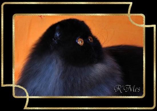les chats de la Chatterie R' Mes 2_migu10