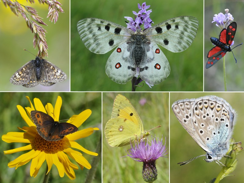 [Lepidoptera divers] Quelques papillons vus cet été Papill10