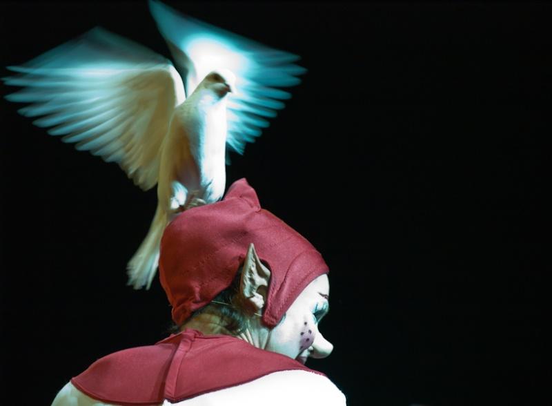 Vos plus belles photos du mois de janvier 2011 Oiseau11
