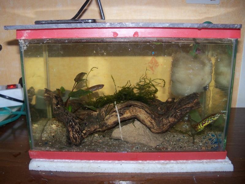 et de .... evolution d'un bac jusqu'a la fish room !! - Page 23 102_5210