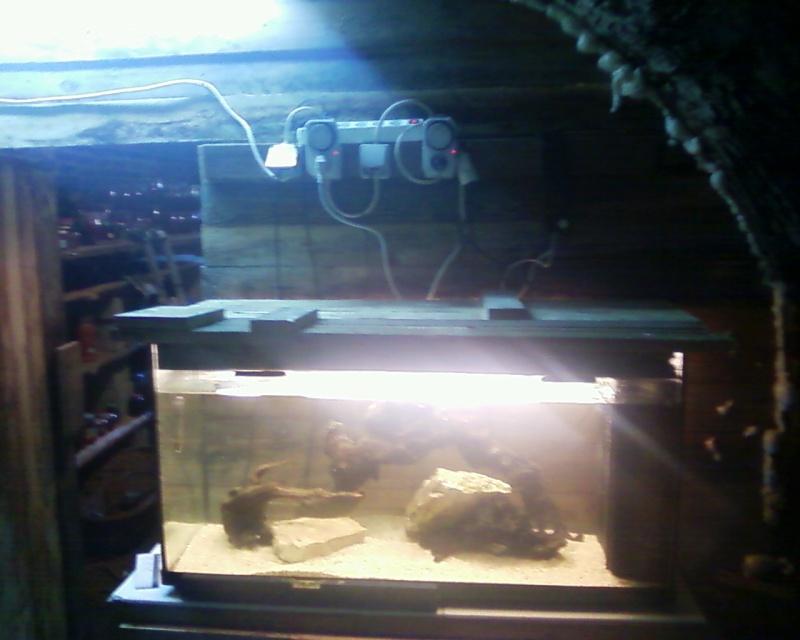 et de .... evolution d'un bac jusqu'a la fish room !! - Page 20 Photos16