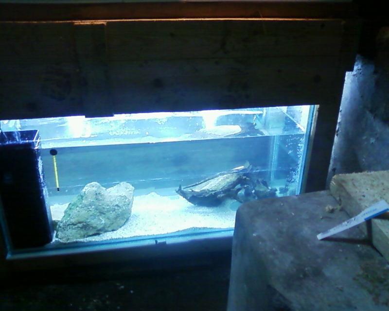 et de .... evolution d'un bac jusqu'a la fish room !! - Page 20 Photos17