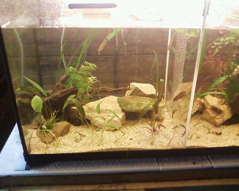 et de .... evolution d'un bac jusqu'a la fish room !! - Page 22 Photos19