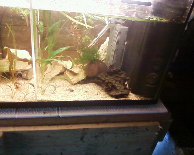 et de .... evolution d'un bac jusqu'a la fish room !! - Page 22 Photos20