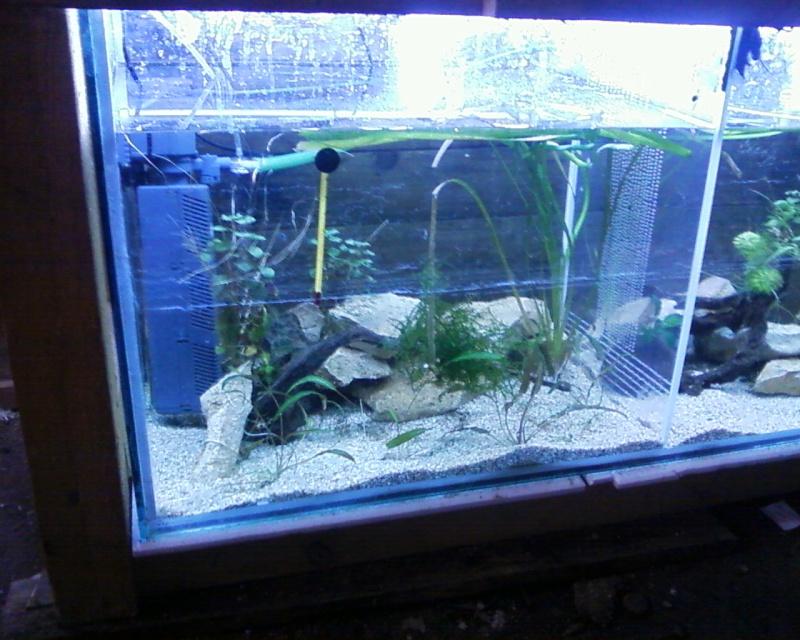 et de .... evolution d'un bac jusqu'a la fish room !! - Page 22 Photos21