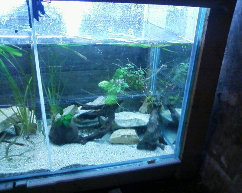 et de .... evolution d'un bac jusqu'a la fish room !! - Page 22 Photos22