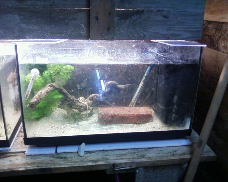 et de .... evolution d'un bac jusqu'a la fish room !! - Page 22 Photos24