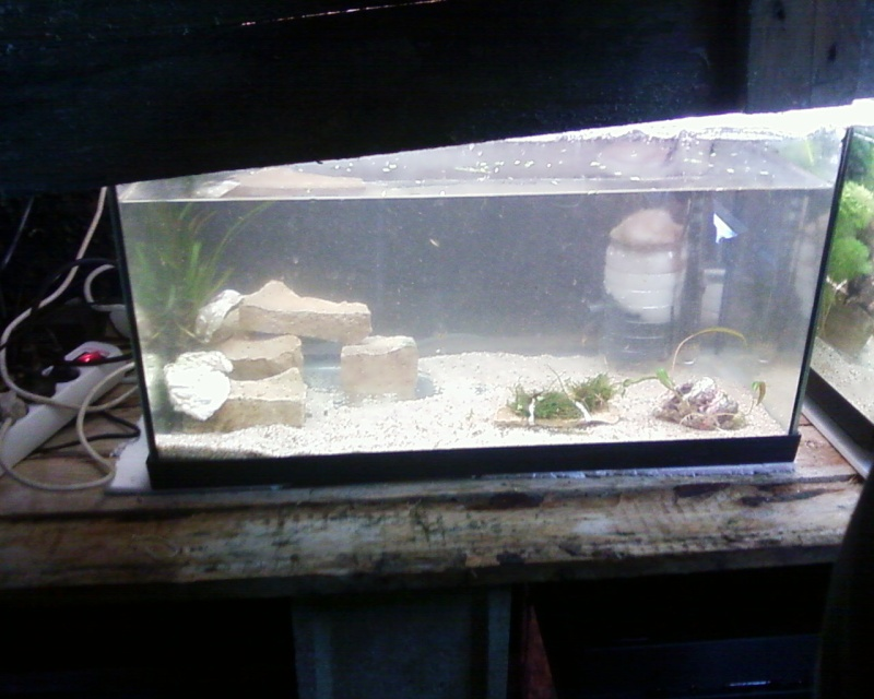 et de .... evolution d'un bac jusqu'a la fish room !! - Page 22 Photos25
