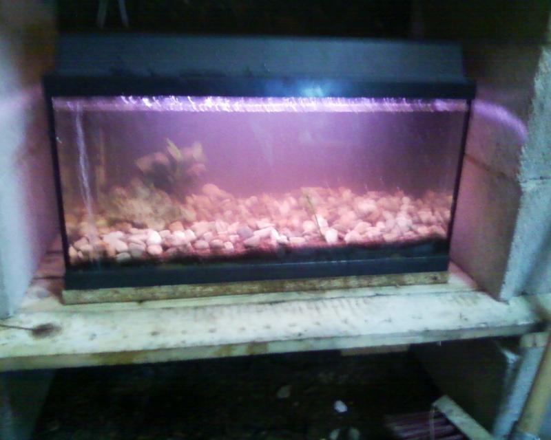 et de .... evolution d'un bac jusqu'a la fish room !! - Page 22 Photos26