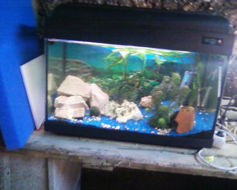 et de .... evolution d'un bac jusqu'a la fish room !! - Page 22 Photos27