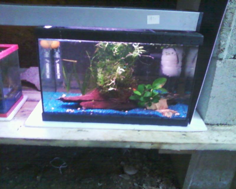 et de .... evolution d'un bac jusqu'a la fish room !! - Page 22 Photos28