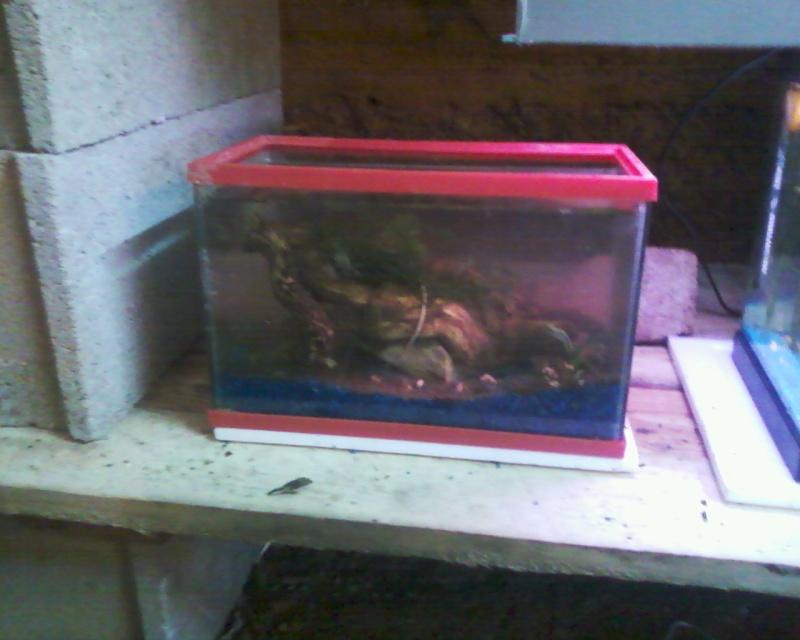 et de .... evolution d'un bac jusqu'a la fish room !! - Page 22 Photos29