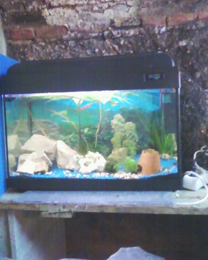 et de .... evolution d'un bac jusqu'a la fish room !! - Page 23 Photos33