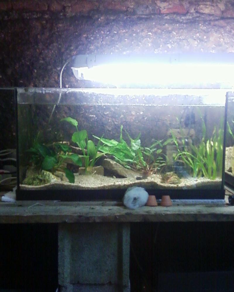 et de .... evolution d'un bac jusqu'a la fish room !! - Page 23 Photos34