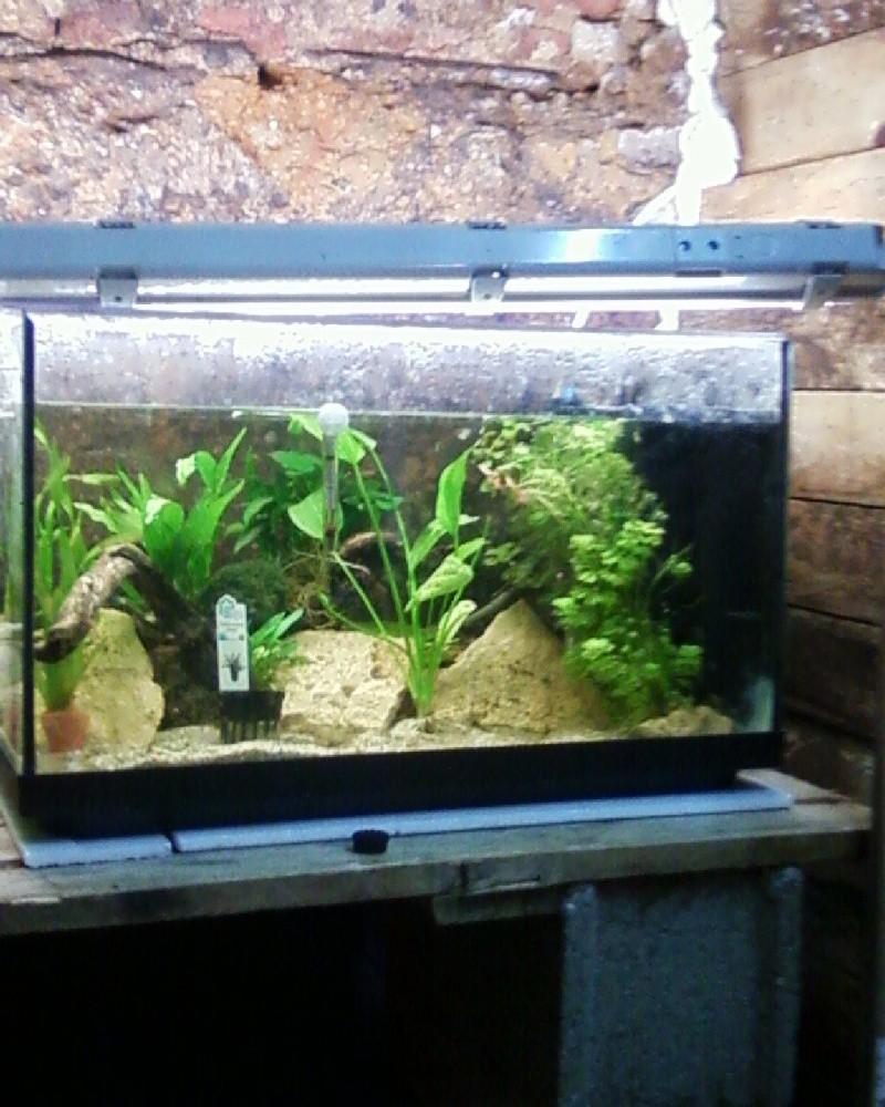 et de .... evolution d'un bac jusqu'a la fish room !! - Page 23 Photos35