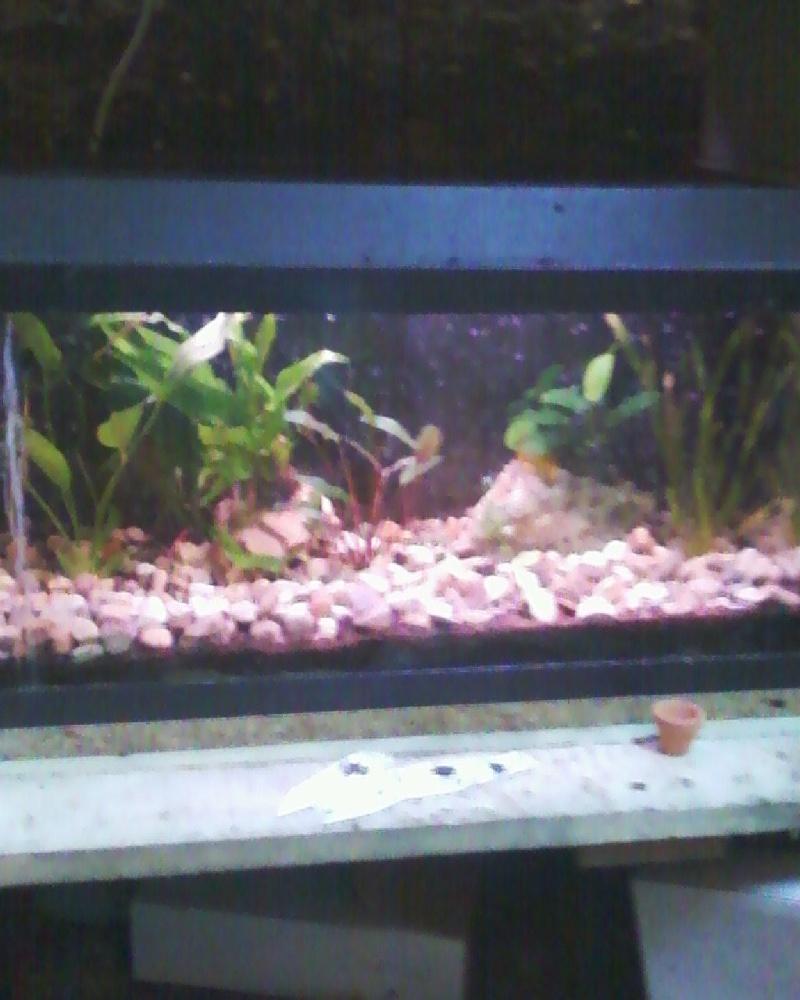 et de .... evolution d'un bac jusqu'a la fish room !! - Page 23 Photos36