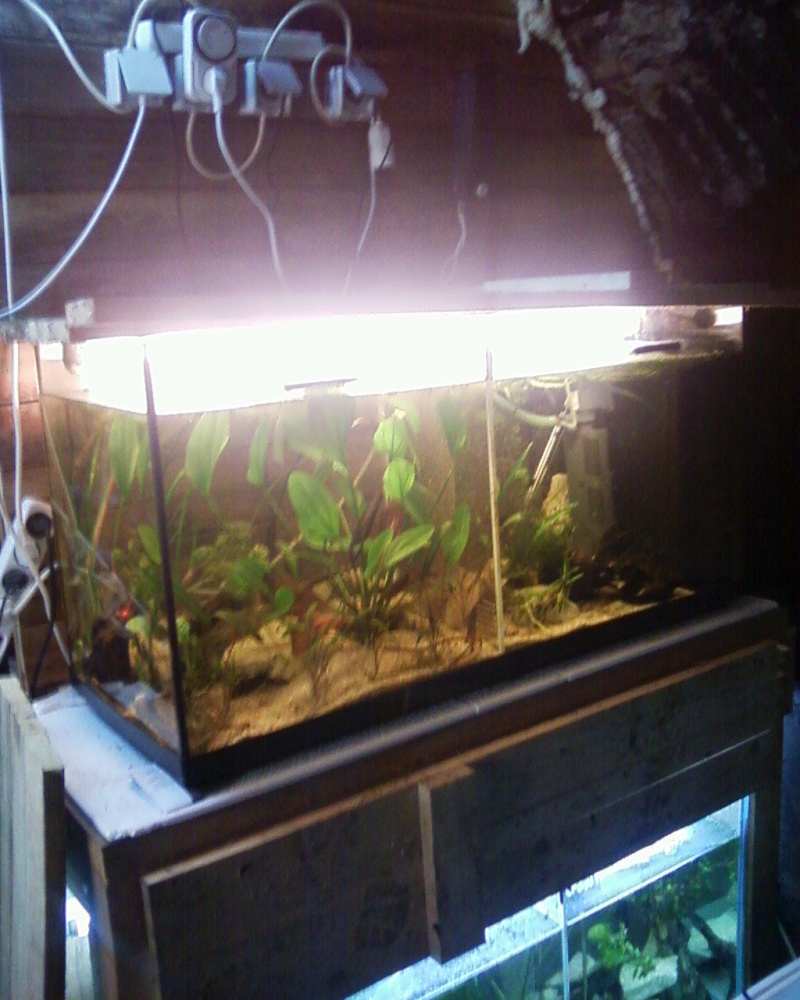 et de .... evolution d'un bac jusqu'a la fish room !! - Page 23 Photos37