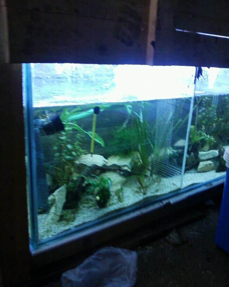 et de .... evolution d'un bac jusqu'a la fish room !! - Page 23 Photos38