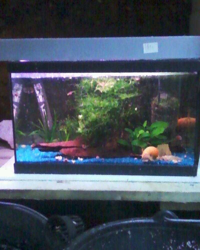 et de .... evolution d'un bac jusqu'a la fish room !! - Page 23 Photos39