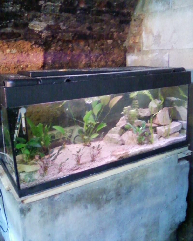 et de .... evolution d'un bac jusqu'a la fish room !! - Page 23 Photos40