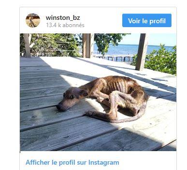Un photographe en visite sur une petite île déserte découvre un chien affamé qui changera sa vie Capt_210