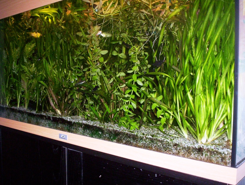 Invasion d'algues Aquari11